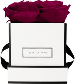 Infinity Collection Velvet Plum Small white - square